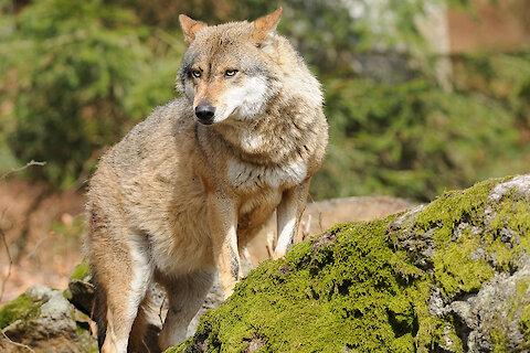Sonnenuntergang in der Haidelregion im Bayerischen Wald